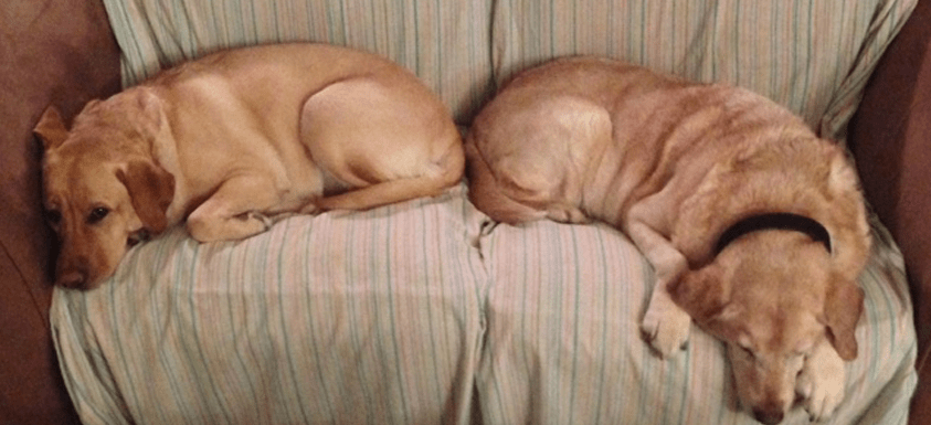 Bed and Breakfast Dogs